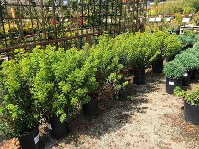 shrubs trees and vines