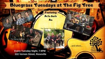 Bluegrass tuesdays