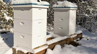 Pic%202%20winter%20hives%20(2)